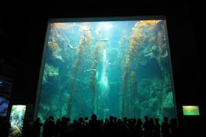 Sleepover At National Museum Of Marine Biology And Aquarium Tour Packages