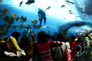 National Museum Of Marine Biology And Aquarium Tour Packages